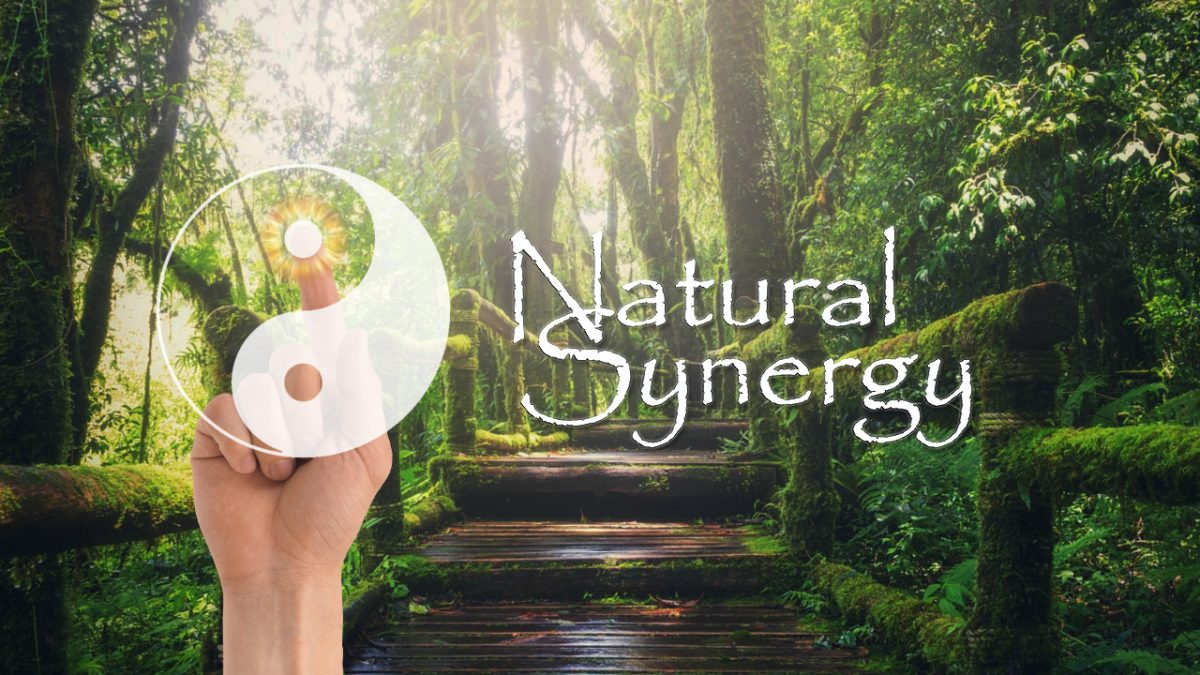 natural synergy cure Green book banner