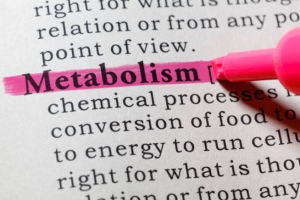"highlighting the ""metabolism"" word"